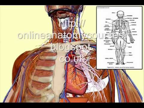 Online Anatomy And Physiology Course Includes FREE 3D Software - YouTube