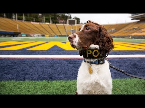 Meet Obi - UCPD's New Bomb Detection K9
