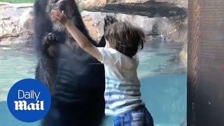 Bear imitates 5-year-old boy jumping - Daily Mail