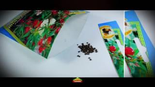 видео Бальзамин смесь (Зипер) ТМ