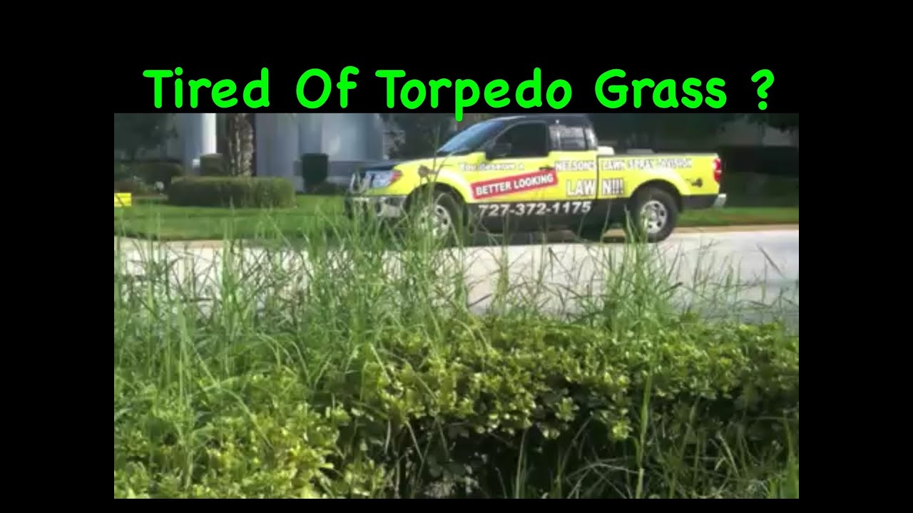 Spraying weeds in flower beds - Removal Of Torpedo Grass From Flower Beds Tampa Fl Nelson S Pest Control Inc