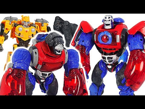 Transformers gorilla Optimus Primal! Defeat dinosaur, Decepticon with Bumblebee! #DuDuPopTOY