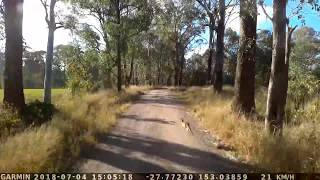 Funny song playing while blasting Air horns to Kangaroo in way of Truck