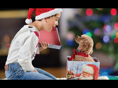 Getting a Puppy for Christmas Compilation 2014 [HD] AHF