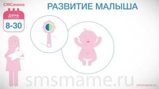 8-30 день(1) Новорожденный - развитие ребенка, грудное вскармливание