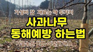 사과나무 동해예방 하는방법  가을농원  [사과재배방법]