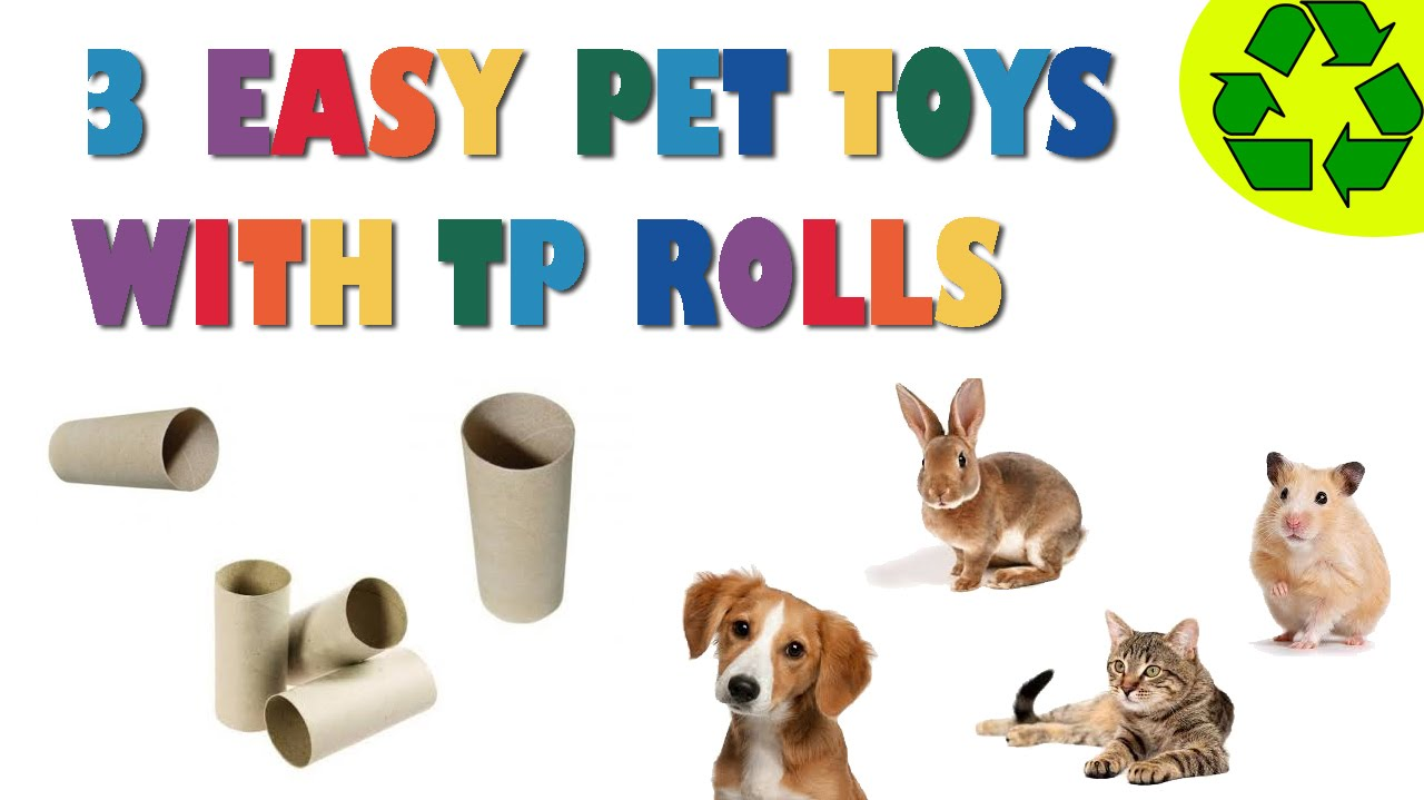 How To Make 3 Easy Pet Toys Made With Toilet Paper Rolls  Pet Crafts   Simplekidscrafts  Youtube