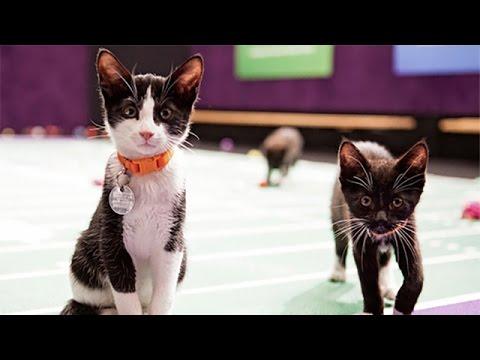 Thumbnail for Cat Video Kitten Bowl I - MVK: Most Valuable Kitten