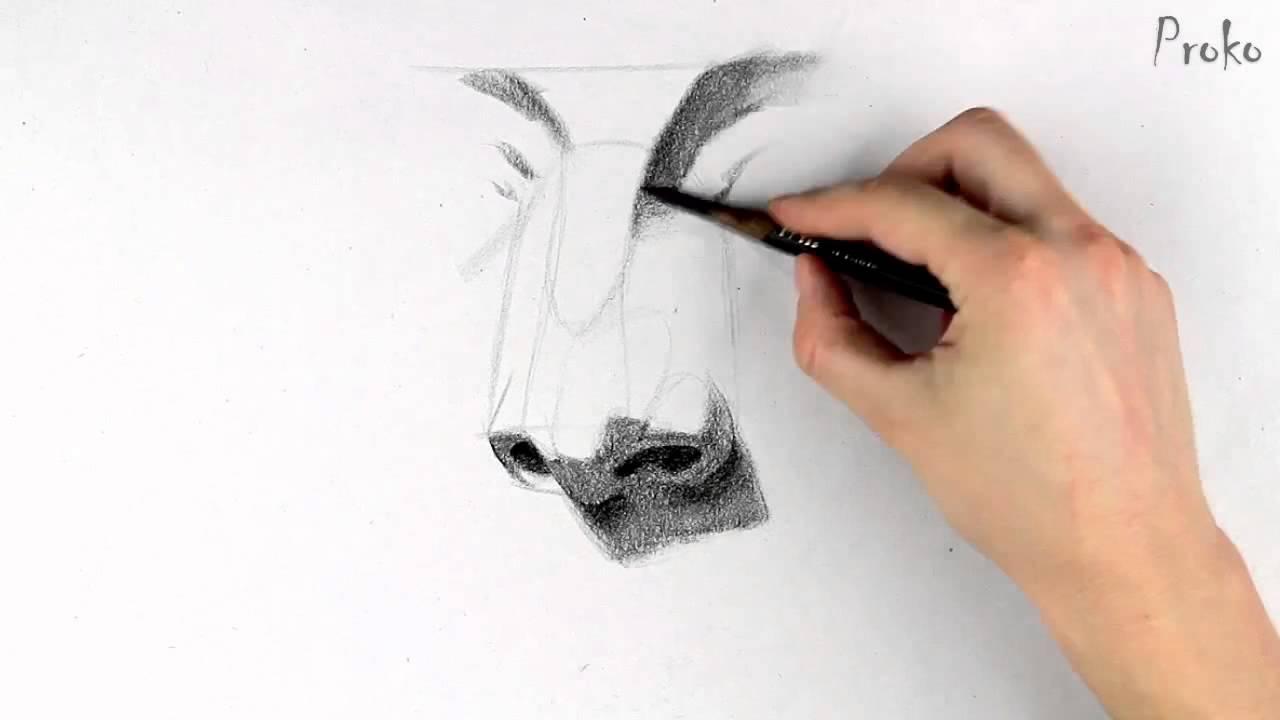 Как рисовать нос схема