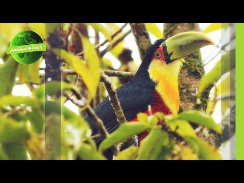 Rainforest Restoration in Brazil's Atlantic Forest