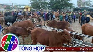 Nhộn nhịp chợ trâu, bò lớn nhất nước ngày giáp Tết