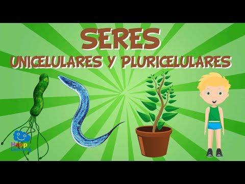 SERES  UNICELULARES Y PLURICELULARES   Vídeos Educativos para Niños