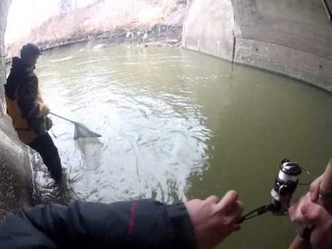 Steelhead fishing elk creek erie pa youtube for Steelhead fishing pa