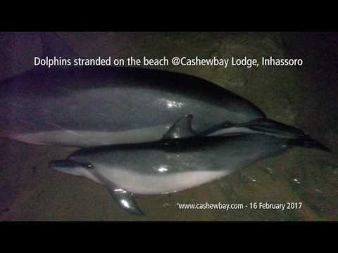 16 dolphins stranded on beach after #Dineo pummels Mozambique