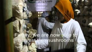 Muslim Aid Indonesia: Harvesting Oyster Mushroom in NTB