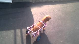 Homemade Dog Wheelchair