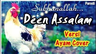 Wow Ayam ini Nyanyi Deen Assalam ( Nissa sabyan ) Ayam Cover #Parodi