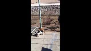 Интимная жизнь моих домашних животных)