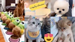 قطط وكلاب مضحكة جدا 😂 -اضحك حتى البكاء على القطط والكلاب # 3 Funny Cats and dogs Compilation