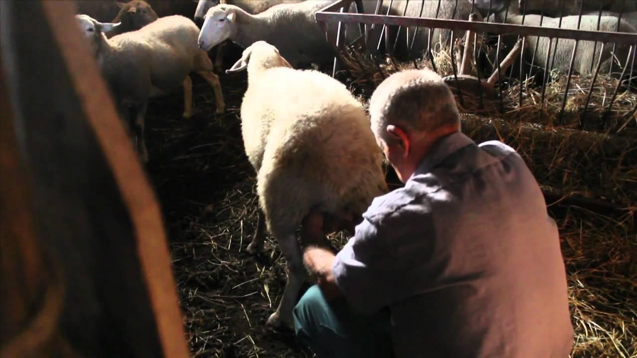 Sennariolo (OR): Azienda agricola cerca Aiutante tutto fare
