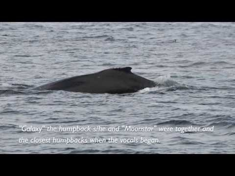 Meeting of the Clans - Orca and Humpback Vocals!!! Near Telegraph Cove, BC CANADA