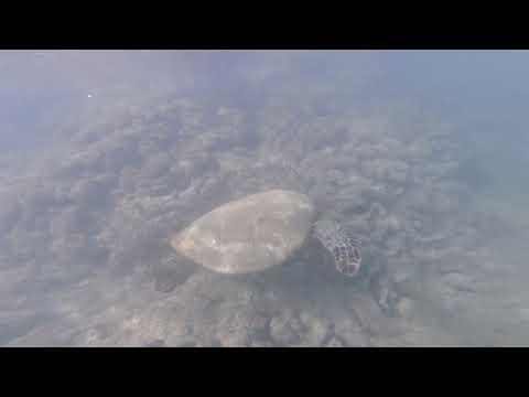 Sea Turtle, Ko Olina Hawaii