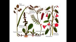 Ботаника. Побег