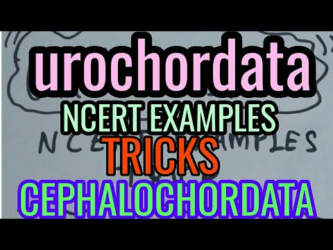Urochordata Cehalochodata Mnemonic Trick To Learn Ncert Examples For
