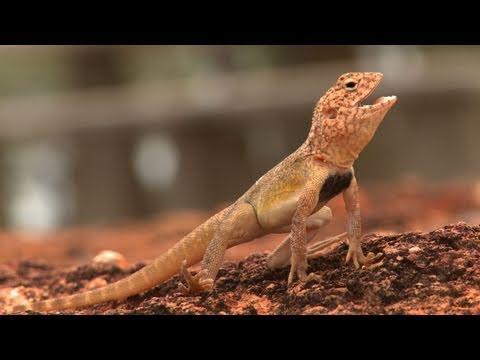Winton Holiday travel Video Guide Queensland, Australia