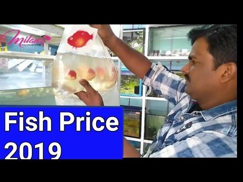 Freshwater AQUARIUM fish Prices & Variety Types Stock Update - New  MILAN  Aquarium Decoration ideas