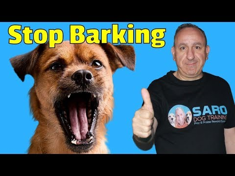 How to stop my dog from barking at other dogs