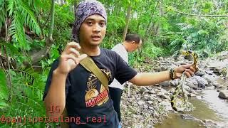 Mancing Ikan Di sarang Ular