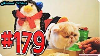 Приколы с животными №179   Кот кушает в костюме пингвина  Смешные животные  Animal videos