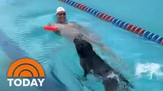 Caeleb Dressel's Dog Jane Impresses With Swim In The Pool