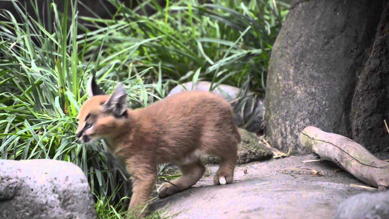 Oregon Zoo - ZooBorns