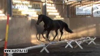 Escobar, 09 Numero Uno x Dutch Capitol, free jumping 09 12