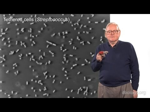 Howard Berg (Harvard) Part 1: Marvels of Bacterial Behavior - History & Physics