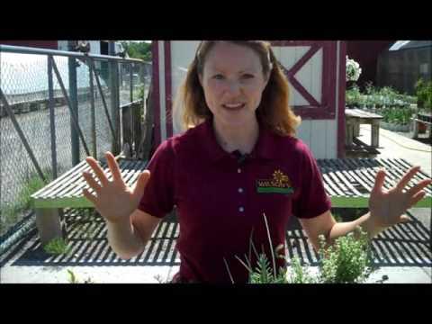 Wilson's Garden Center: Raised Bed