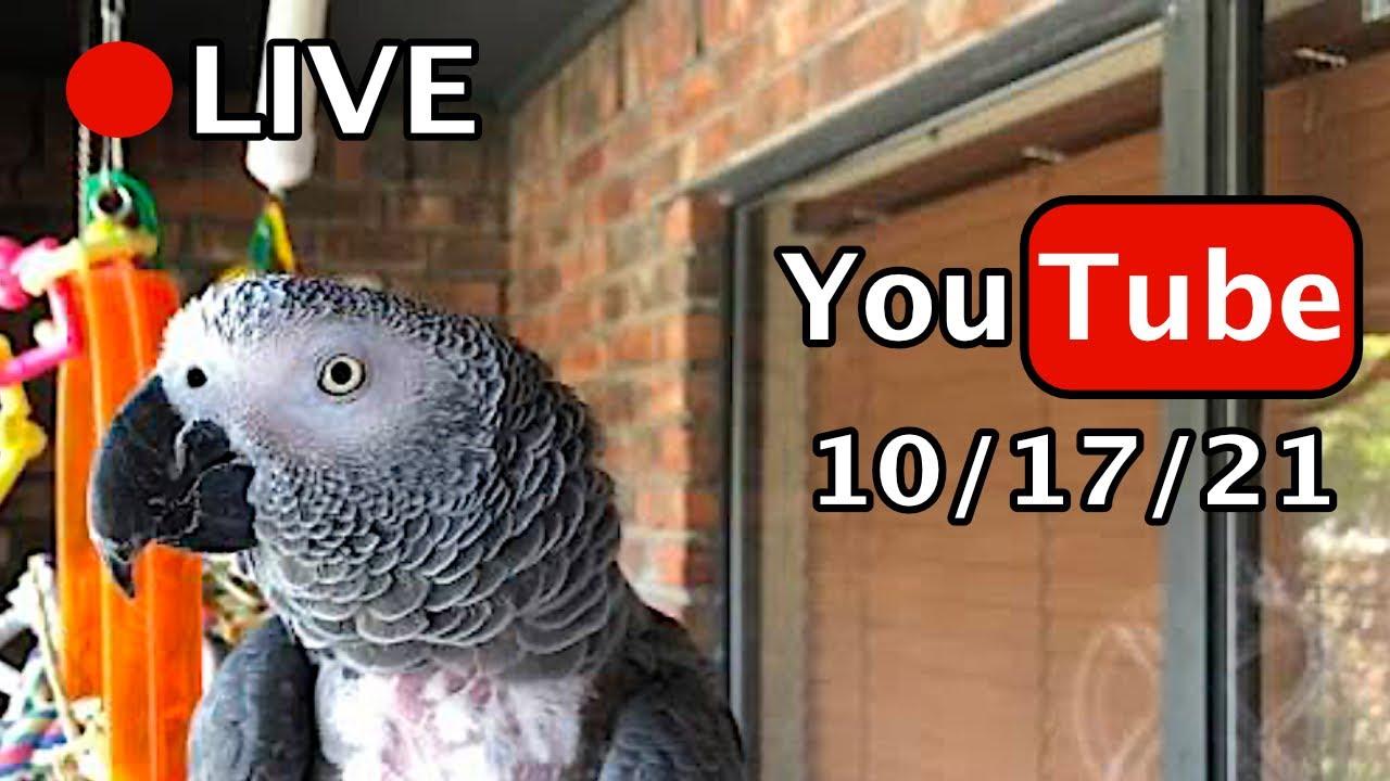 🔴🐦Einstein Parrot LIVE! 10/17/21