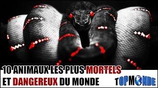TOP 10 Des Animaux Les Plus Dangereux Et Mortels Du Monde