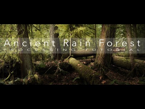 Photoshop Editing Tips  Post processing an Old Growth Forest to Enhance Drama and Depth