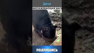 Любимая дача Funny animals Смешные животные веселые видео юмор подборка Shorts