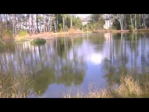 NC Nature News | The Lake and Pond Exploration