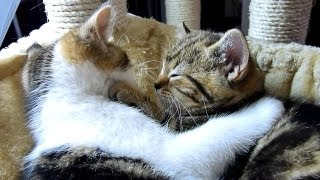 Funny Cats : How to become a good boyfriend - 12 tips from Cute Kitten Rocky.