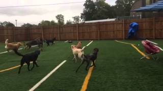 Dog Daycare Charleston Sc. Pooch Palace