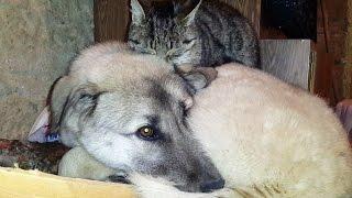 Gümüşhane'de kedi ile köpeklerin anlamlı dostluğu