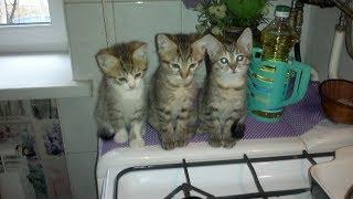 Наши котята// Нам сегодня 10 месяцев//