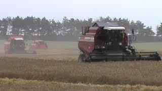 Harvesting of winter wheat in Zhuravlinoye OJSC