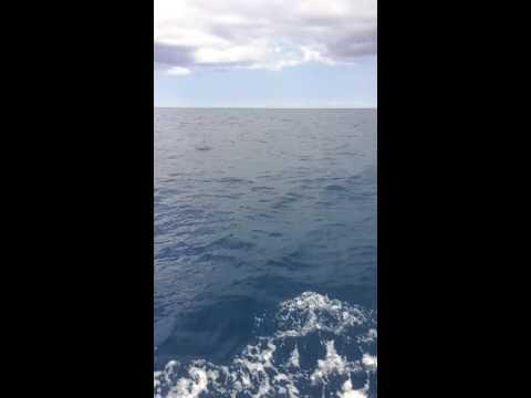 Offshore stuff(2)