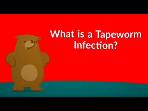 What Is A Tapeworm Infection? (Symptoms, Causes, Treatment, Prevention)